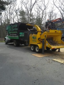 Tree Service in Tolland, Mass