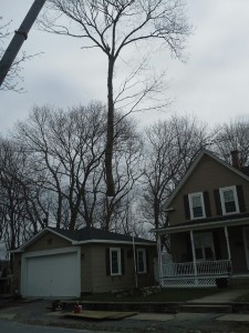 Residential Tree Removal in East Bridgewater, Mass